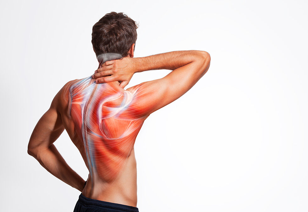 Does Post-Exercise Muscle Soreness Mean Muscle Growth?
